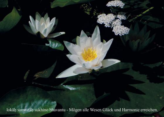 "Postkarte ""Lotos im Schamanengarten"""