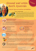 Ernährung nach Ayurveda (A3)