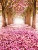 "Blankbook ""Blütenallee"""