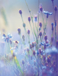 Blankbook Sommerwiese